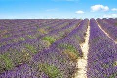 Campo de la lavanda en Provence, al sur de Francia Imágenes de archivo libres de regalías