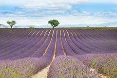 Campo de la lavanda en Provence, Francia Imagenes de archivo