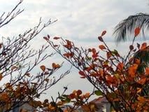 Campo de la mañana del resorte? de la hierba verde y del cielo nublado azul Fotos de archivo