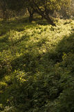 Campo de la mala hierba de la hierba en naturaleza Fotografía de archivo