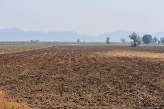 Plantación de la mandioca. Fotografía de archivo