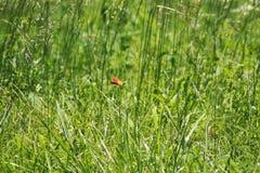 Campo de la mariposa fotografía de archivo libre de regalías