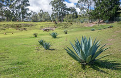 Campo de la montaña con las plantas del cactus y los animales salvajes Foto de archivo