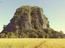 Campo de la montaña y del arroz Fotos de archivo