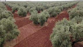 Campo de la opinión del aire de olivos cerca de Jaén almacen de video