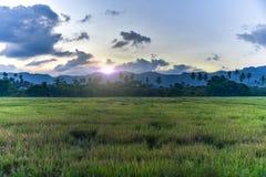 Campo de la paleta del arroz fotos de archivo