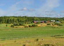 Campo de la patata y edificios agrícolas Fotos de archivo