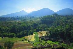 Campo de la planta del árbol de la isla de Bali de la terraza del arroz Fotografía de archivo