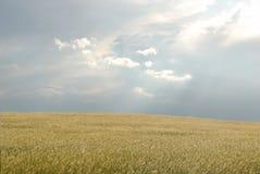 Campo de la pradera Imagen de archivo libre de regalías