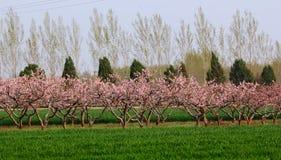 Campo de la primavera fotos de archivo