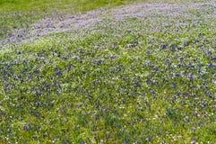 Campo de la primavera. imágenes de archivo libres de regalías