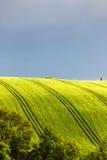 Campo de la primavera con los árboles Imagenes de archivo