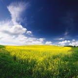 Campo de la primavera en el paisaje hermoso de Ucrania Foto de archivo libre de regalías