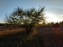 Campo de la puesta del sol Imagen de archivo libre de regalías