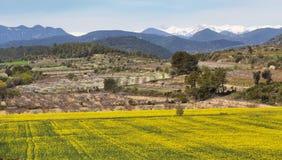 Campo de la rabina con las montañas nevosas de pirenees detrás de, en Cataluña, España Fotos de archivo