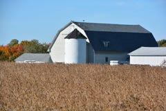 Campo de la soja en frente una granja Foto de archivo libre de regalías