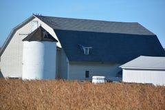 Campo de la soja en frente una granja Foto de archivo