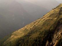 Campo de la terraza del arroz Imagen de archivo