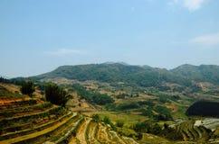 Campo de la terraza en el sapa Vietnam Foto de archivo libre de regalías