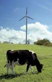 Campo de la vaca Fotografía de archivo