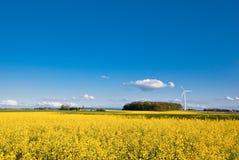Campo de la violación y turbina de viento Imagen de archivo libre de regalías