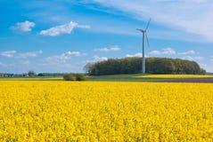 Campo de la violación y turbina de viento Foto de archivo