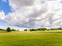 Campo de la violación de semilla oleaginosa bajo el cielo dramático Fotos de archivo