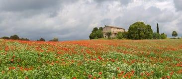 Campo de las amapolas alrededor de una casa de campo rural Fotos de archivo