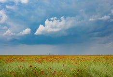 Campo de las amapolas con el fondo y las nubes industriales Imagenes de archivo