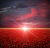 Campo de las amapolas en la puesta del sol Fotos de archivo libres de regalías