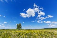 Campo de las flores amarillas de la violación y del cielo azul Paisaje ruso Foto de archivo libre de regalías