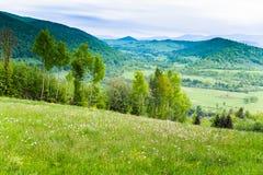 Campo de las flores blancas y de las montañas azules Foto de archivo libre de regalías