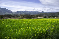 Flores en el valle Fotografía de archivo libre de regalías