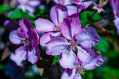 Campo de las flores de la margarita imagen de archivo libre de regalías