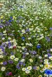 Campo de las flores salvajes del campo Fotos de archivo