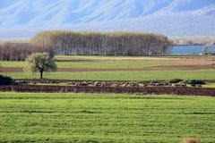 Campo de las ovejas en el lago Fotografía de archivo libre de regalías