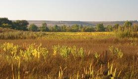 Campo de las plantas de oro del otoño imagen de archivo libre de regalías