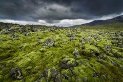 Campo de lava coberto com o musgo Imagens de Stock Royalty Free