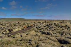 Campo de lava em Landmannalaugar, Islândia Foto de Stock