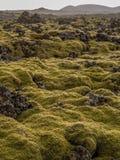 Campo de lava Mossy Imagens de Stock Royalty Free