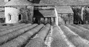 Campo de Lavander Imagenes de archivo