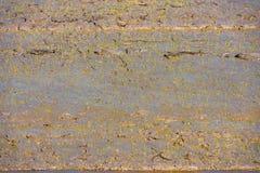 Campo de los brotes jovenes del arroz Fotografía de archivo