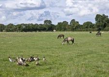 Campo de los granjeros. Imagenes de archivo