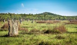Campo de los montones de la termita Foto de archivo libre de regalías