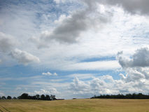 Campo de maíz amarillo con las nubes que amenazan fotos de archivo libres de regalías