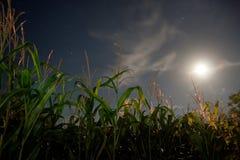 Campo de maíz bajo claro de luna Foto de archivo libre de regalías