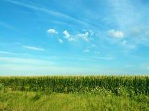 Campo de maíz con el cielo azul y las nubes imagen de archivo libre de regalías