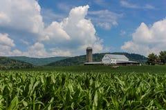 Campo de maíz con el granero, las montañas, y las nubes mullidas Foto de archivo libre de regalías