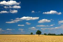 Campo de maíz con los cielos azules en Palatinado, Alemania imagenes de archivo