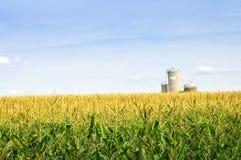 Campo de maíz con los silos Fotos de archivo